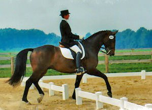 Nancy Smith showing dressage